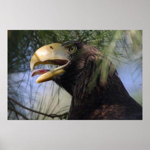 Eagle calvo que oculta el poster