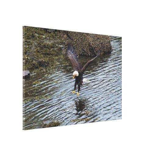 Eagle calvo que pesca en línea de la playa costera lona estirada galerias