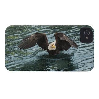 Eagle calvo que pesca fall en la caja costera de l iPhone 4 Case-Mate carcasa