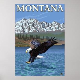 Eagle calvo que se zambulle - Montana Póster
