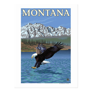 Eagle calvo que se zambulle - Montana Tarjeta Postal