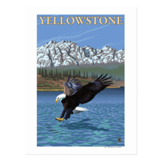 Eagle calvo que se zambulle - parque nacional de tarjetas postales