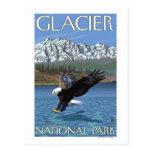 Eagle calvo que se zambulle - Parque Nacional Glac Postal