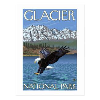 Eagle calvo que se zambulle - Parque Nacional Postal