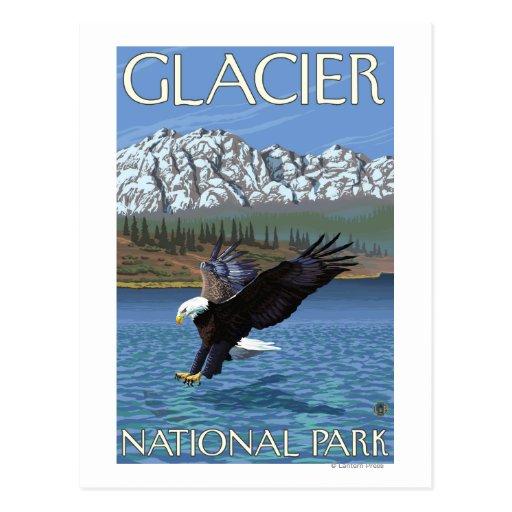 Eagle calvo que se zambulle - Parque Nacional Tarjetas Postales