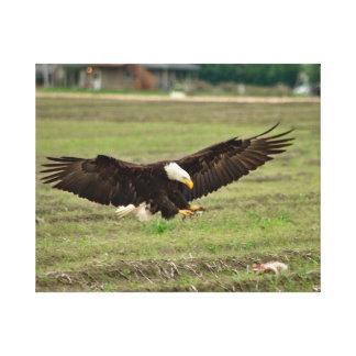 Eagle calvo que separa sus alas y aterrizaje lona estirada galerias