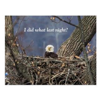 Eagle calvo que tiene un mún día del pelo tarjetas postales