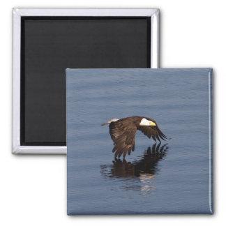 Eagle calvo que vuela iman de nevera