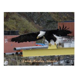 Eagle calvo que vuela sobre un muelle, puerto hola postal