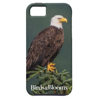 Eagle calvo real funda para iPhone SE/5/5s