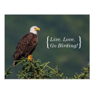 Eagle calvo real postal