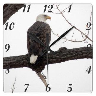 Eagle calvo reloj cuadrado