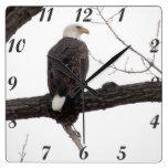 Eagle calvo relojes