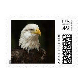 Eagle calvo franqueo