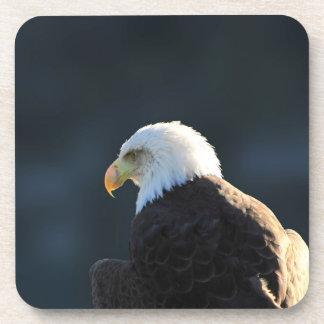 Eagle calvo solitario posavasos de bebida