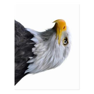 Eagle calvo tarjetas postales