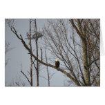 Eagle calvo y BlackHawk Notecard - esconda dentro Tarjeta Pequeña