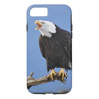 Eagle chauve appelant, Homer, Alaska, Haliaetus iPhone 8/7 Case