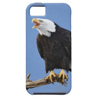 Eagle chauve appelant, Homer, Alaska, Haliaetus iPhone SE/5/5s Case
