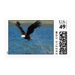 Eagle con la captura sellos