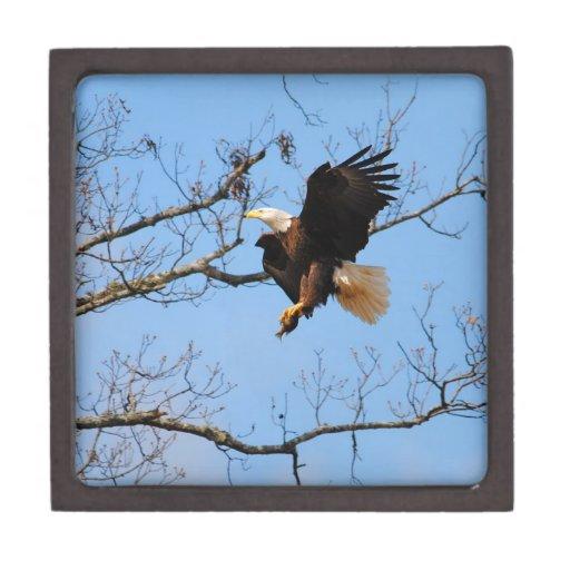 Eagle con los pescados 2 cajas de recuerdo de calidad