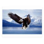 Eagle de Alaska en vuelo Postal