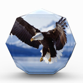 Eagle de Alaska en vuelo
