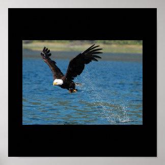 Eagle de elevación poster