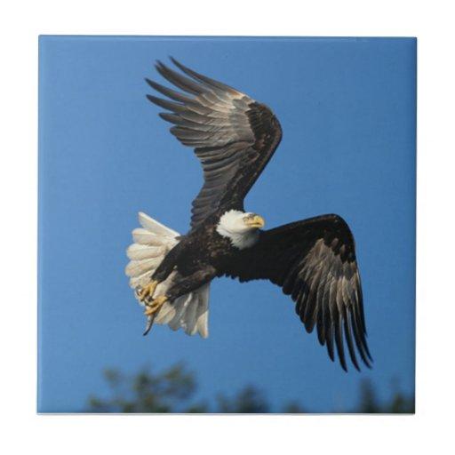 Eagle de elevación teja cerámica