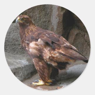 Eagle de oro etiqueta redonda