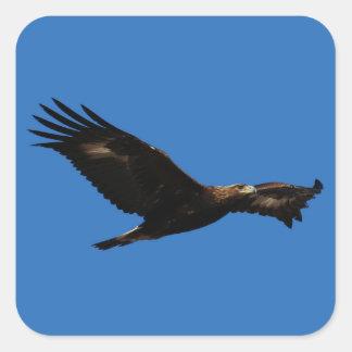 Eagle de oro colcomanias cuadradases