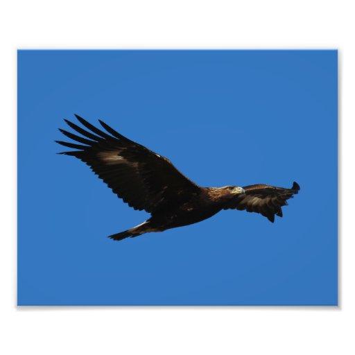 Eagle de oro impresion fotografica