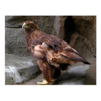 Eagle de oro tarjetas postales