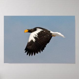 Eagle de Steller Impresiones