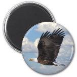 Eagle en el cielo imán de frigorífico