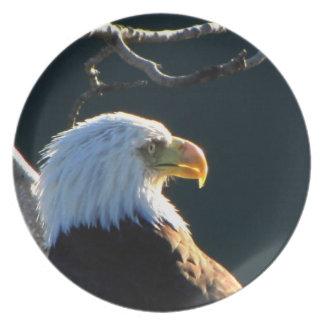 Eagle en la atención platos