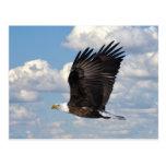 Eagle en la postal del cielo