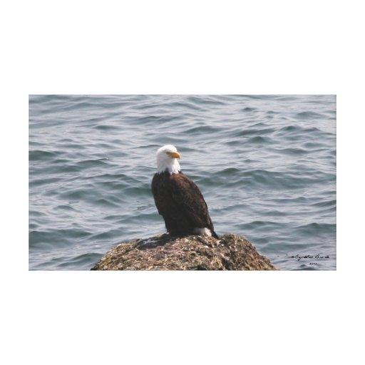 Eagle en la roca lona envuelta para galerías