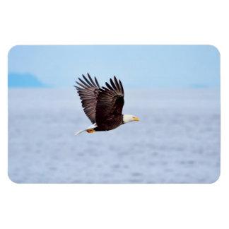 Eagle en vuelo imanes de vinilo