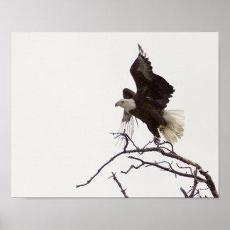 Eagle en vuelo póster