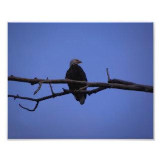 Eagle encaramado fotografias