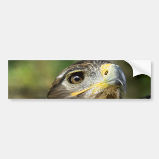 Eagle Eye  Bumper Sticker Car Bumper Sticker