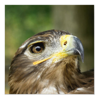 "Eagle Eye  Invitations 5.25"" Square Invitation Card"
