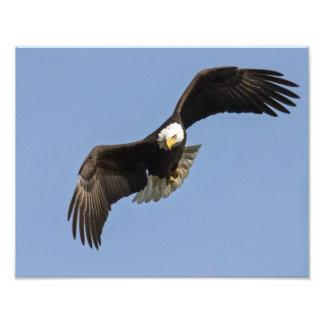 Eagle Eye Photo Print