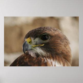 Eagle eye poster