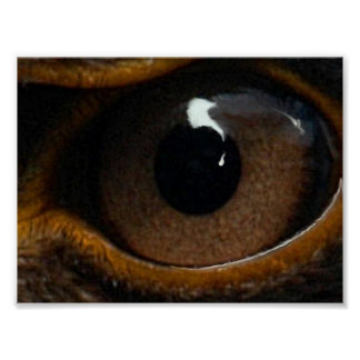 Eagle eye test print