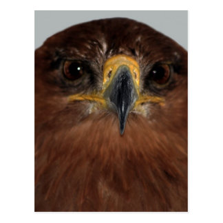 Eagle eyes and head postcard