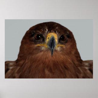 Eagle eyes and head print