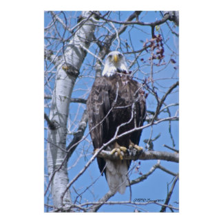 Eagle Eyes Print