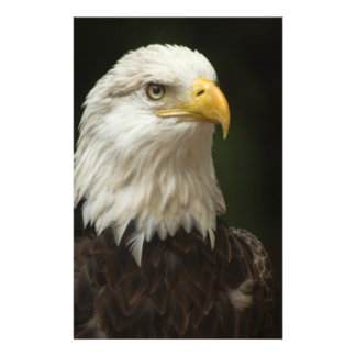 Eagle Flyer